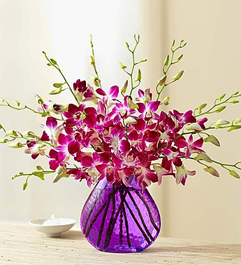 Exotic breeze orchids judys village flowers 10 stems with purple vase mightylinksfo