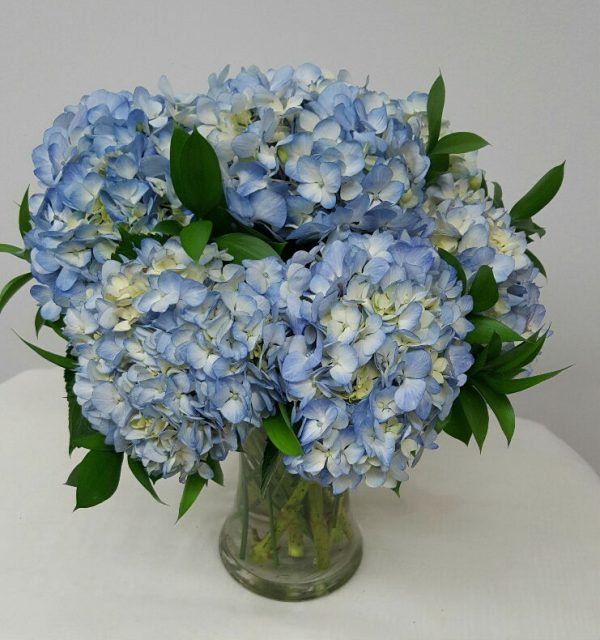 HydrangeainBlue_resized