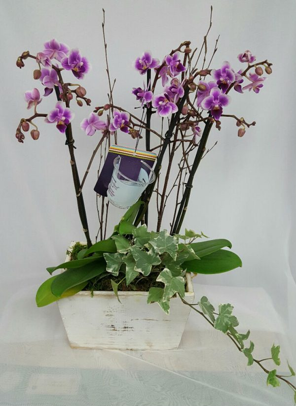 OrchidPlanter_resized
