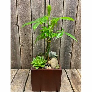 MONEY TREE AND SUCCULENT PLANTER