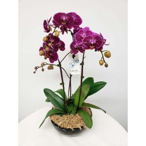 Orchid Plant Collection